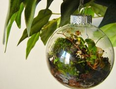 Mr. Beams wants to remind you to stay green this season!  www.mrbeams.com-- ornament terrarium! Awesome idea!