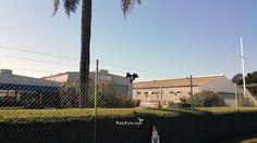 Barbed wire checking | Megabat | Hemmant Queensland