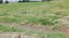 Sagarpa buscará ampliación de ciclo de riego en apoyo a productores de la Laguna.