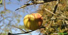 Äpfel sind fast überall zu haben. Sie sind nicht nur lecker und ergeben einen tollen Saft! Wir zeigen dir 5 Dinge, die du mit dem noch Apfel machen kannst.