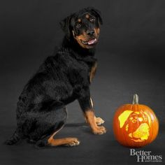 Pin for Later: 22 Downloadable Dog Breed Pumpkin Stencils Rottweiler