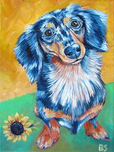 Dappled Long Haired Dachshund -- My Favorite