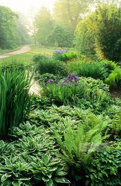 Hostas, ferns, iris, (something else?) in a shade garden