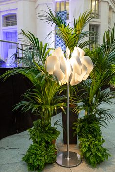 Today, CovetED joined Best Interior Designers to show you the amazing work of Adriana Nicolau, one of the best interior designers from Spain. Best Interior, Spain, Designers, Amazing, Plants, Style, Stylus, Spanish, Plant