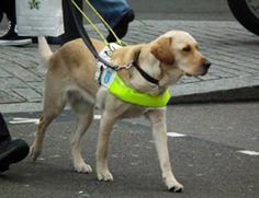 I read a news about how a visually impaired owner, and her guide dog survived a dog attack recently. To know how a trained guide dog behaves in similar situation as well as know the prevention go here: