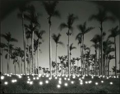 Available for sale from Haines Gallery, Tokihiro Sato, Palm Black and white transparency over lightbox, 20 × 24 in Photography Guide, Conceptual Photography, Beach Photography, Amazing Photography, Black And White Beach, Exposure Time, Take Better Photos, Art For Art Sake, Beautiful Beaches