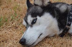 Josh's dog Sam Picture by David Daugherty