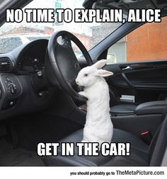 Let's Go, Alice