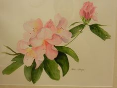 "Watercolor. Original painting, ""Rhodies"". Watercolorbyhelen@gmail.com"