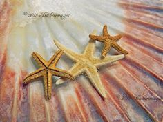 Scallop Sea Shell Starfish Macro Nature Wall Art by Fischerimages, $45.95