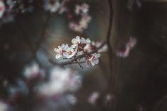 https://flic.kr/p/sSox9w | Spring