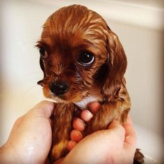 15 Puppies That Are Desperate To Tell You It's Puppy Awareness Week