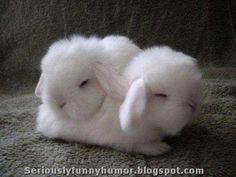 #Cute white baby #rabbits sleeping cuddling