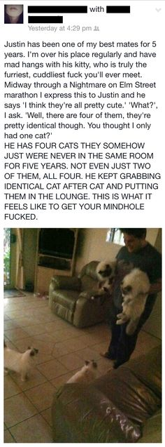 hiccuptherunt: weareallfromearth: best-of-imgur: Mindhole fuckedhttp://best-of-imgur.tumblr.com New favourite cat story. This is the best post about cats I've ever read