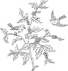 Audubon's Birds of America Coloring Book: John James