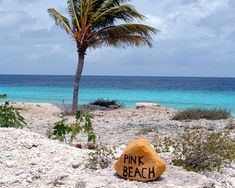 Pink Beach, Bonaire. I remember thinking pink beach was mostly just white beach with a lot of conch shells
