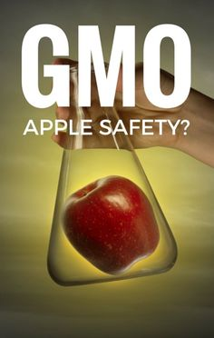 Dr Oz took a closer look at the GMO non-browning Arctic Apples that will soon be available in our country to find out if they're truly safe to consume. http://www.recapo.com/dr-oz/dr-oz-news/dr-oz-gmo-non-browning-arctic-apples-safe/