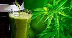 Shocking Results: Woman Replaces 40 Medications With Raw Cannabis Juice - Freedom Informant Network