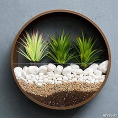Create a stunning centerpiece for any room with our round wall vases. These vases are great for growing succulents and indoor plants, and will add color and glam to any wall in your house. Combine different sizes to create your own custom design. Wall Terrarium, Hanging Terrarium, Hanging Wall Planters, Hanging Vases, Wall Vases, Flower Wall, Flower Vases, Flower Pots, Air Plants