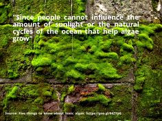 nice #quote Five things to know about toxic algae