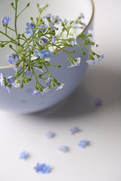 Baby blue flowers and bowl