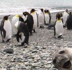 ¿Documentales sólo de pingüinos? no mientras existan focas en el mismo barrio.
