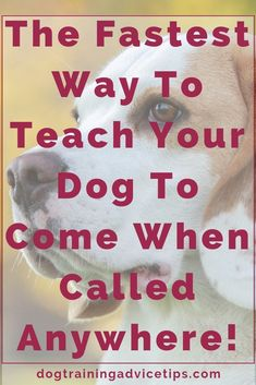 The Fastest Way to Teach Your Dog to Come When Called Anywhere! - Dog Training Advice Tips - Dog Obedience Training Tips - Hunde Dog Training Techniques, Dog Training Tips, Agility Training, Training Classes, Training Videos, Potty Training, Brain Training, Training Kit, Training Pads