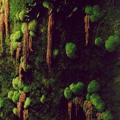 100% #vegetal #deco #concept salon de coiffure #vegetalementprovence mur végétal