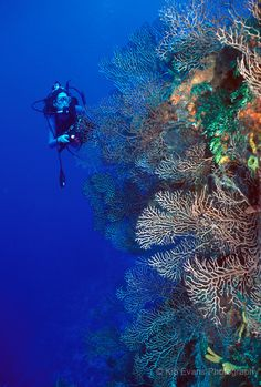 The Palancar Reef, Cozumel. I wish I had an underwater camera to capture our dives!