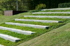ground cover between steps softens the stone edges & is low maintenance, by Byron Bay Garden Design