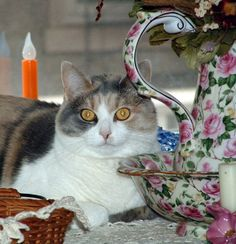 Pets | Mosby from the  Belle Hearth Bed & Breakfast located in Waynesboro, VA.