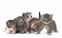 Kitten Stock Photos, Stock Images and Vectors | Stockfresh