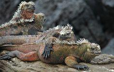 Galapagos, Ecuador http://www.southamericaperutours.com/