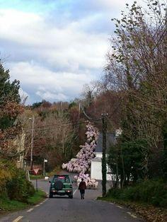 Moving the sheep, Glencar, Co.Kerry, via Ireland's Natural Beauty FB page. Ireland Vacation, Ireland Travel, Southern Ireland, Irish Times, Images Of Ireland, England Ireland, Irish Art, Edinburgh Scotland, Earth Science