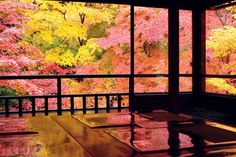 Kyoto, Japan 瑠璃光院 #AutumnLeaves #紅葉 | GANREF