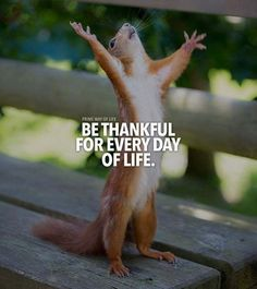 Inspirational Positive Quotes :Be thankful for every day..