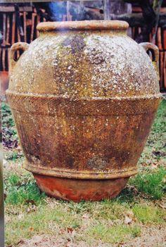 antique terra cotta olive jars with plants.