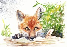 Original Watercolour Painting by Be Coventry,Animals,Realism,Peeping Fox