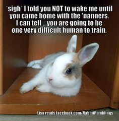 Guess I like to collect things. Here are some memes that have been found around the internet and perhaps been featured in a Rabbit Rambli. Bunny Paws, Pet Bunny Rabbits, Cute Baby Bunnies, Pet Rabbit, Funny Bunnies, Cute Babies, Rabbit Jokes, Funny Rabbit, Cute Little Animals
