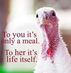 Its insane we celebrate a Holiday of thanks by killing and dinning on the corpses of the innocent...sad