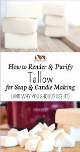 Why You Should Use Tallow & How To Render & Purify Tallow for Soap & Candle Making