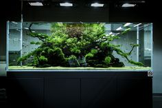 ADA Nature Aquarium Gallery - Photo by Viktor Lantos Aquarium Aquascape, Planted Aquarium, Aquascaping, 120 Gallon Aquarium, Aquarium Landscape, Nature Aquarium, Saltwater Aquarium, Aquarium Fish Tank, Freshwater Aquarium