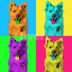 making pop art andy warholl your pet ....