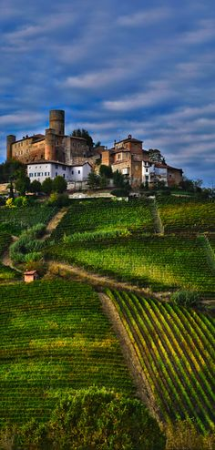 The picturesque and gentle pastoral countryside of ~ Langhe, Piedmont, Italy