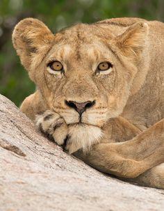 Kruger Magic by Lee Bothma, via 500px