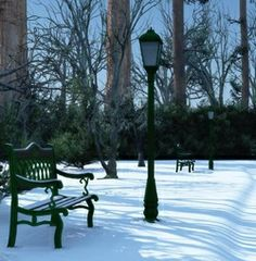 Snow in park, vk Outdoor Furniture, Outdoor Decor, Park, Plants, Christmas, Xmas Cards, Classic, Printing, Reunions
