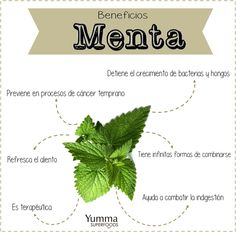 6 Beneficios de la menta