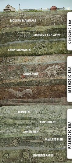 Rock Layers: Timeline of Life on Earth - Prehistoric Planet