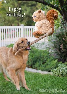 Squirrel Piñata Birthday Cards by KarenHoglund