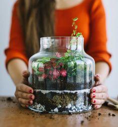 Pokojovky - pokojové rostliny, obchod, poradna Mason Jars, Mugs, Tableware, Dinnerware, Tumblers, Tablewares, Mason Jar, Mug, Dishes